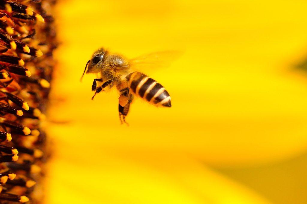 image d'abeille